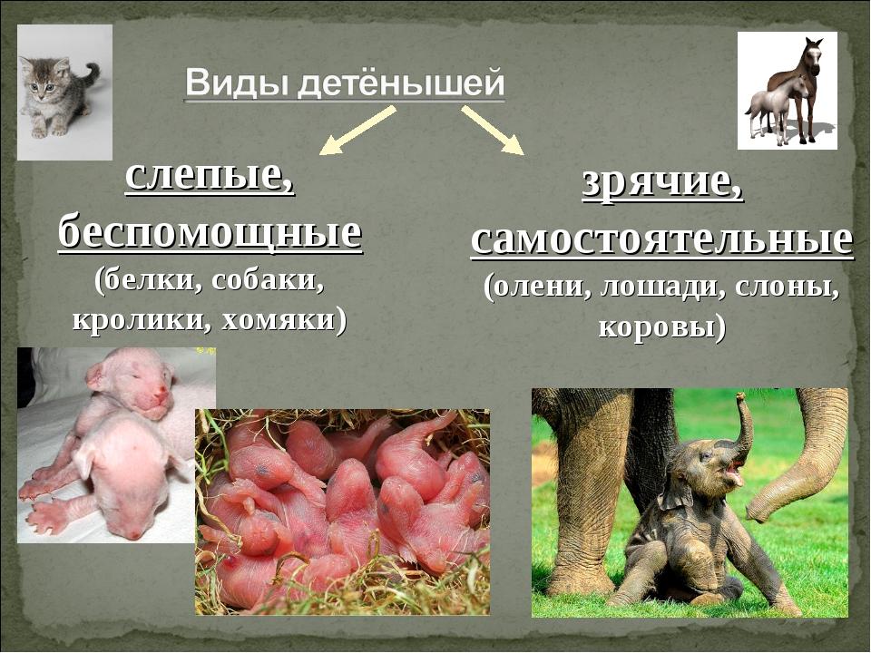 слепые, беспомощные (белки, собаки, кролики, хомяки) зрячие, самостоятельные...