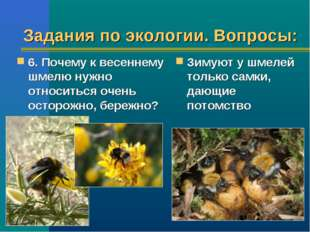 Задания по экологии. Вопросы: 6. Почему к весеннему шмелю нужно относиться оч