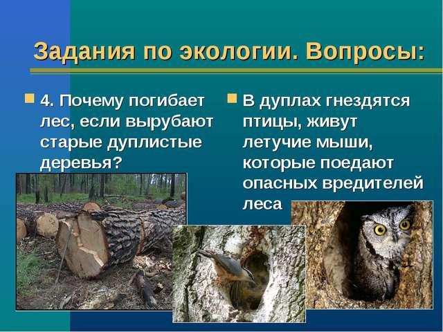 Задания по экологии. Вопросы: 4. Почему погибает лес, если вырубают старые ду...