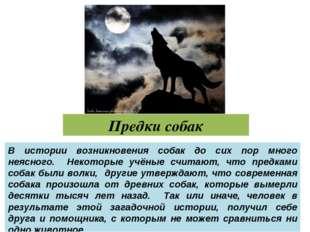 Предки собак В истории возникновения собак до сих пор много неясного. Некотор
