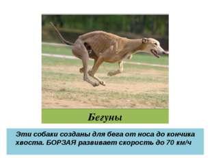 Бегуны Эти собаки созданы для бега от носа до кончика хвоста. БОРЗАЯ развивае