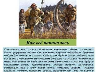 Как всё начиналось Считается, что из всех домашних животных одними из первых