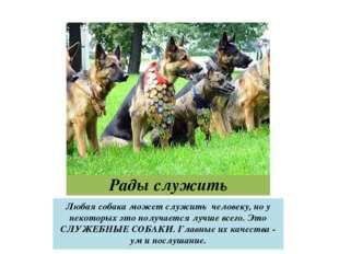 Рады служить Любая собака может служить человеку, но у некоторых это получает