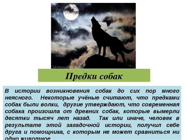 Предки собак В истории возникновения собак до сих пор много неясного. Некотор...