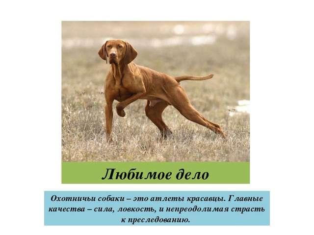 Любимое дело Охотничьи собаки – это атлеты красавцы. Главные качества – сила,...