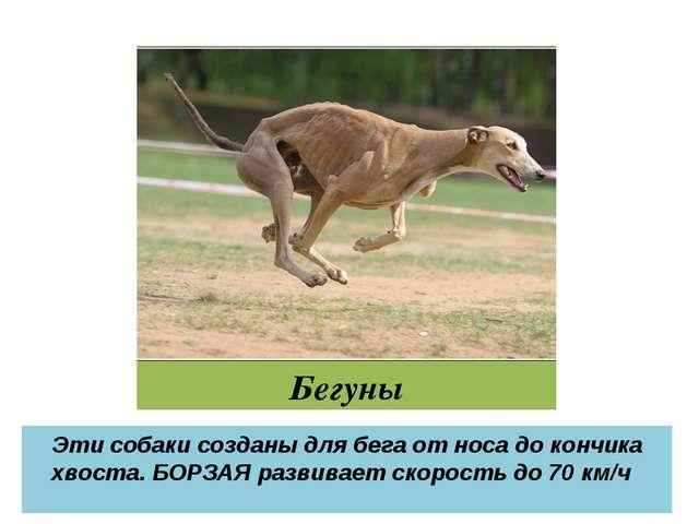 Бегуны Эти собаки созданы для бега от носа до кончика хвоста. БОРЗАЯ развивае...
