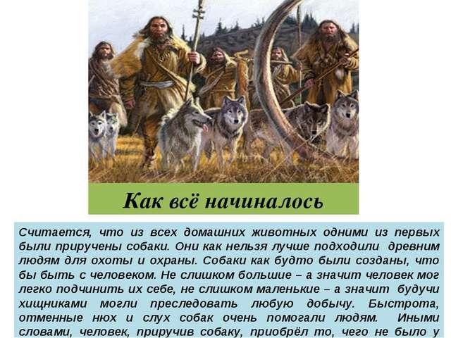 Как всё начиналось Считается, что из всех домашних животных одними из первых...