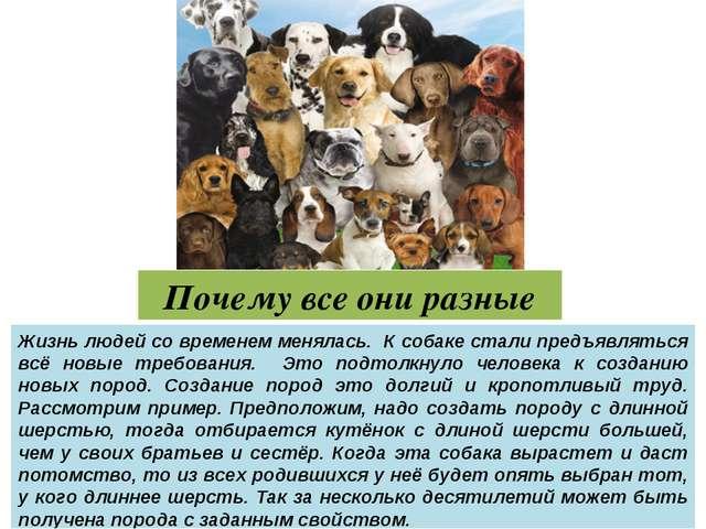 Почему все они разные Жизнь людей со временем менялась. К собаке стали предъя...