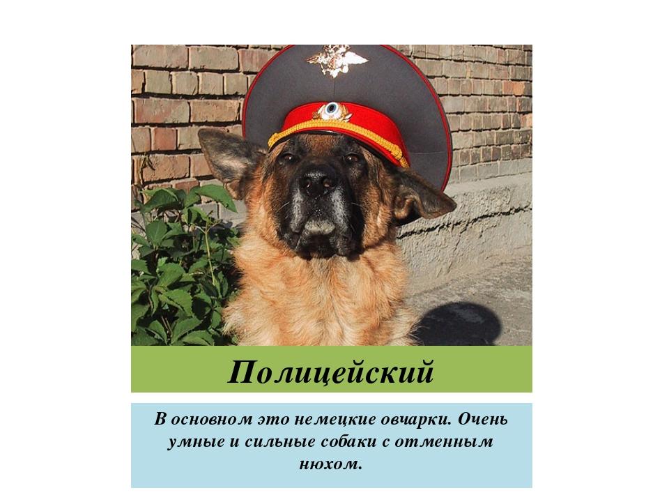 Полицейский В основном это немецкие овчарки. Очень умные и сильные собаки с о...