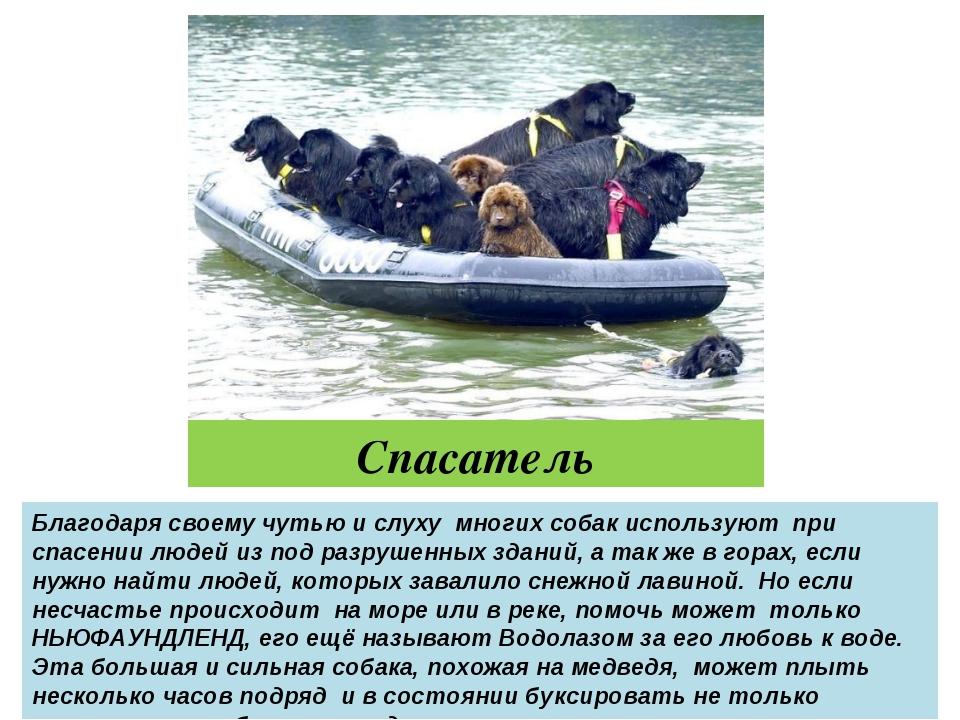 Спасатель Благодаря своему чутью и слуху многих собак используют при спасении...