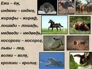 Ежи – ёж, индюки – индюк, жирафы – жираф, лошади – лошадь, медведи – медведь,