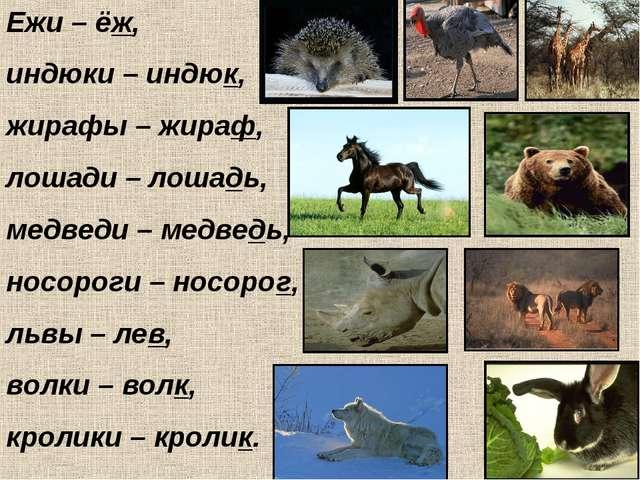 Ежи – ёж, индюки – индюк, жирафы – жираф, лошади – лошадь, медведи – медведь,...