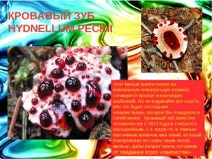 КРОВАВЫЙ ЗУБ HYDNELLUM PECKII Этот милый грибок похож на пожеванную жевательн