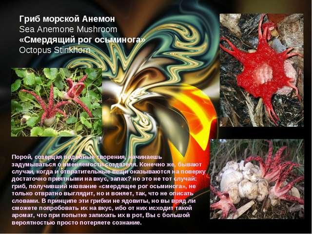 Гриб морской Анемон Sea Anemone Mushroom «Смердящий рог осьминога» Octopus St...