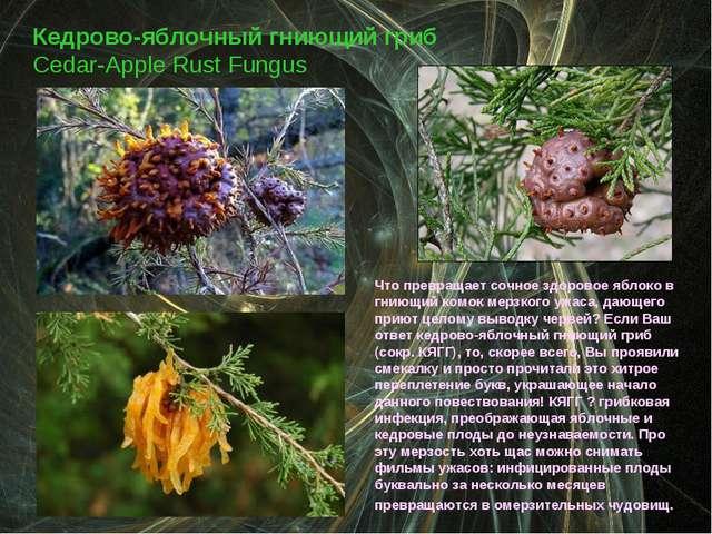Кедрово-яблочный гниющий гриб Cedar-Apple Rust Fungus Что превращает сочное з...