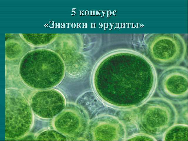 5 конкурс «Знатоки и эрудиты»