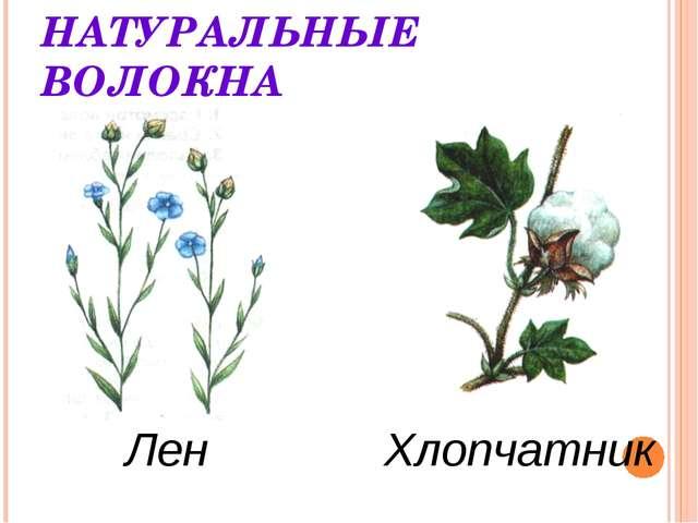 НАТУРАЛЬНЫЕ ВОЛОКНА Лен Хлопчатник
