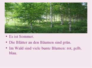 Es ist Sommer. Die Blätter an den Bäumen sind grün. Im Wald sind viele bunte