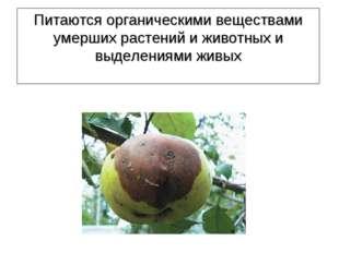 Питаются органическими веществами умерших растений и животных и выделениями ж