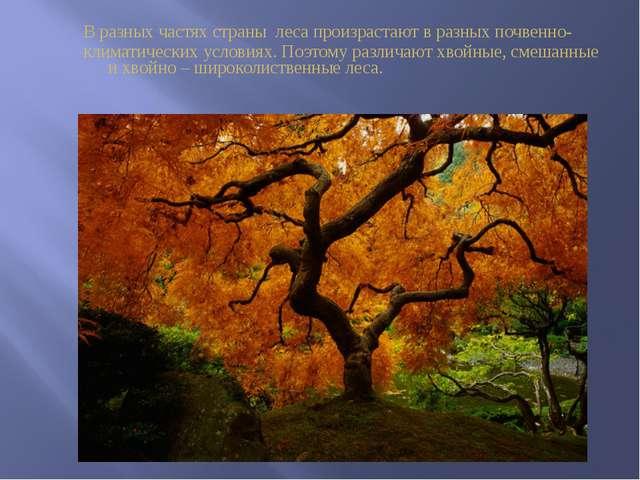 В разных частях страны леса произрастают в разных почвенно- климатических ус...