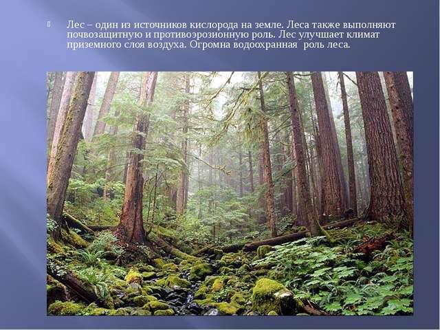 Лес – один из источников кислорода на земле. Леса также выполняют почвозащитн...