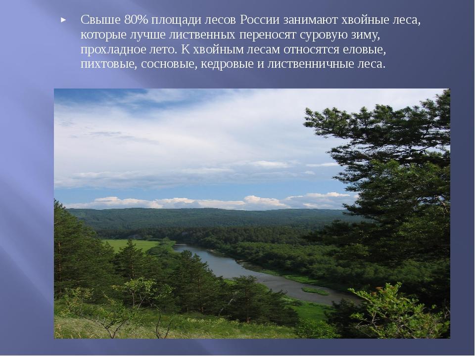 Свыше 80% площади лесов России занимают хвойные леса, которые лучше лиственны...