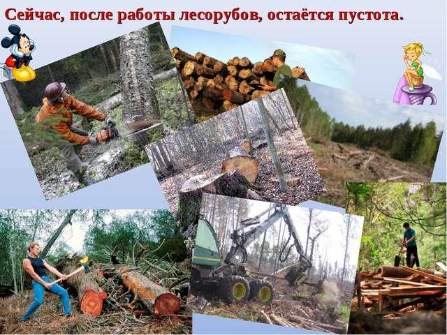 Сейчас, после работы лесорубов, остаётся пустота.