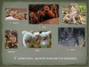 У животных весной появляются малыши. бельчата лисята ежата волчата рысята зай