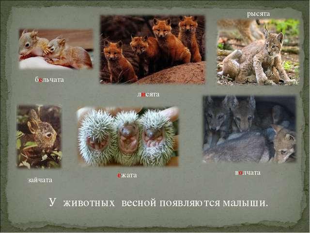 У животных весной появляются малыши. бельчата лисята ежата волчата рысята зай...