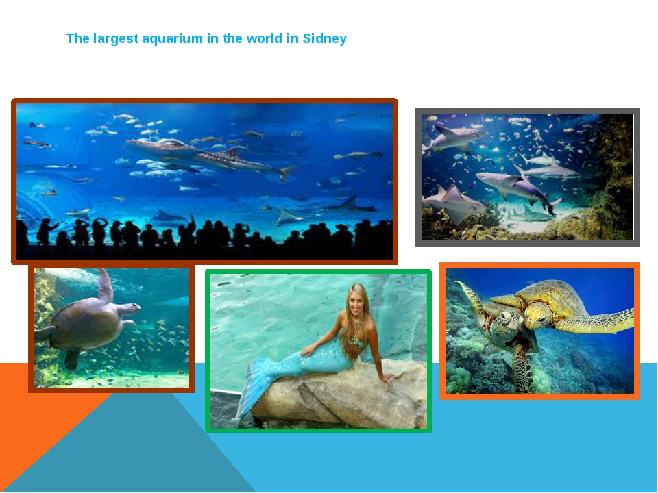 The largest aquarium in the world in Sidney