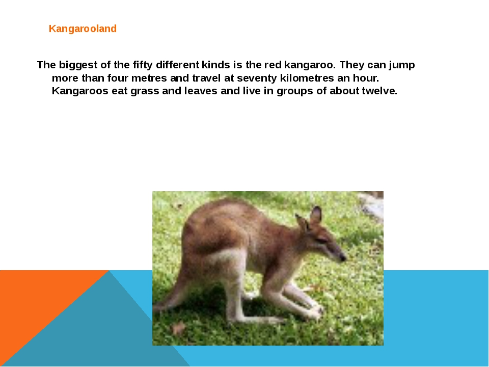 Kangarooland 