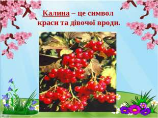 Калина – це символ краси та дівочої вроди.