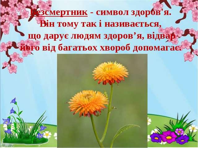 Безсмертник - символ здоров'я. Він тому так і називається, що дарує людям зд...