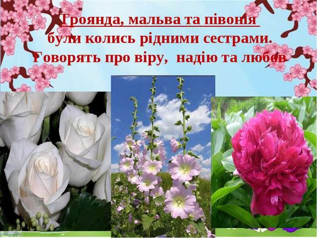 Троянда, мальва та півонія були колись рідними сестрами. Говорять про віру, н...
