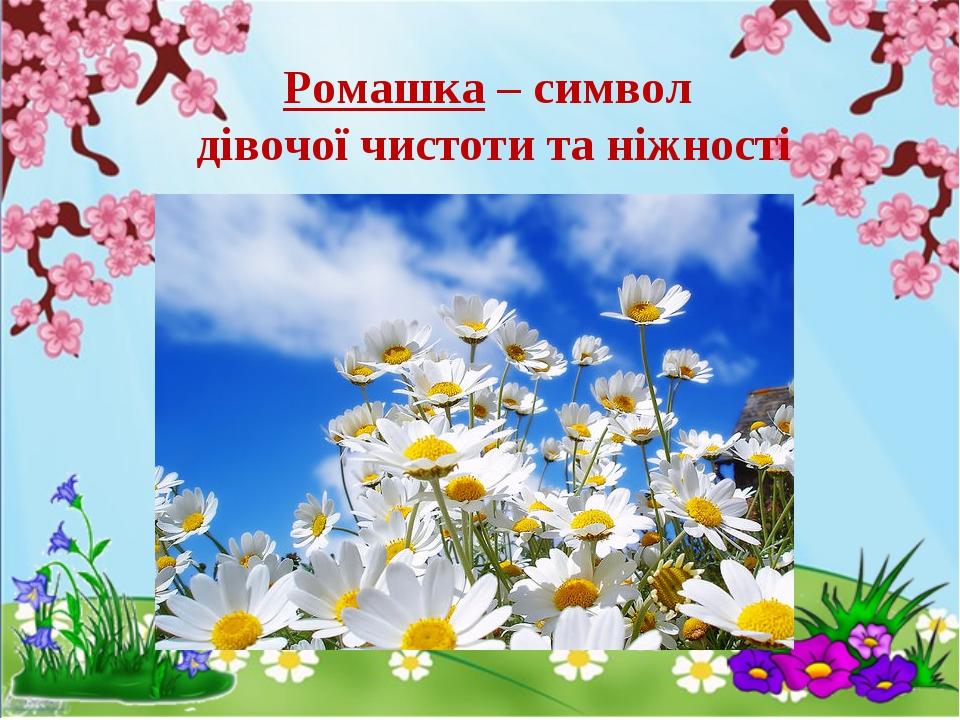Ромашка – символ дівочої чистоти та ніжності