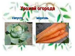 Урожай огорода капуста морковь