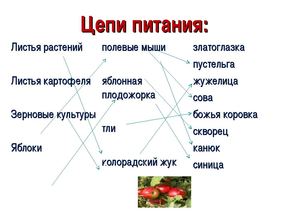 Цепи питания: Листья растений Листья картофеля Зерновые культуры Яблокиполев...