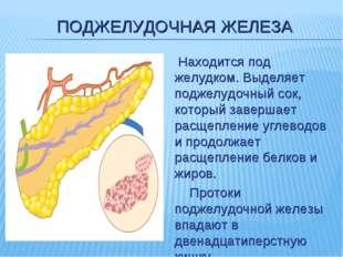 ПОДЖЕЛУДОЧНАЯ ЖЕЛЕЗА  Находится под желудком. Выделяет поджелудочный сок, ко