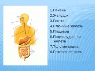 1.Печень 2.Желудок 3.Глотка 4.Слюнные железы 5.Пищевод 6.Поджелудочная железа