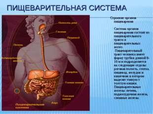 ПИЩЕВАРИТЕЛЬНАЯ СИСТЕМА Строение органов пищеварения Система органов пищеваре