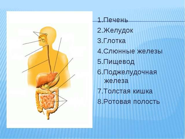 1.Печень 2.Желудок 3.Глотка 4.Слюнные железы 5.Пищевод 6.Поджелудочная железа...