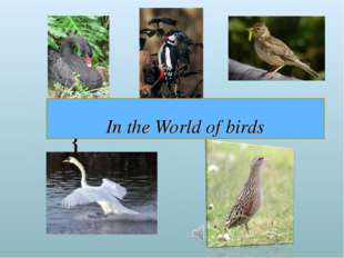 In the World of birds {