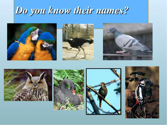 Do you know their names?