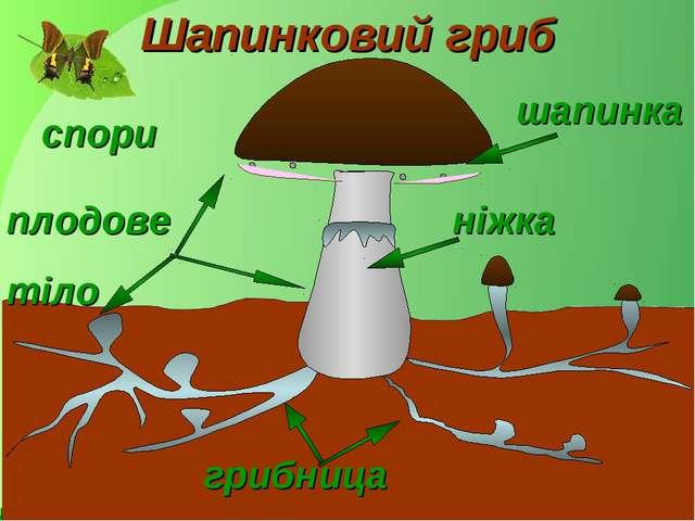 шапинка грибница плодове тіло ніжка Шапинковий гриб спори