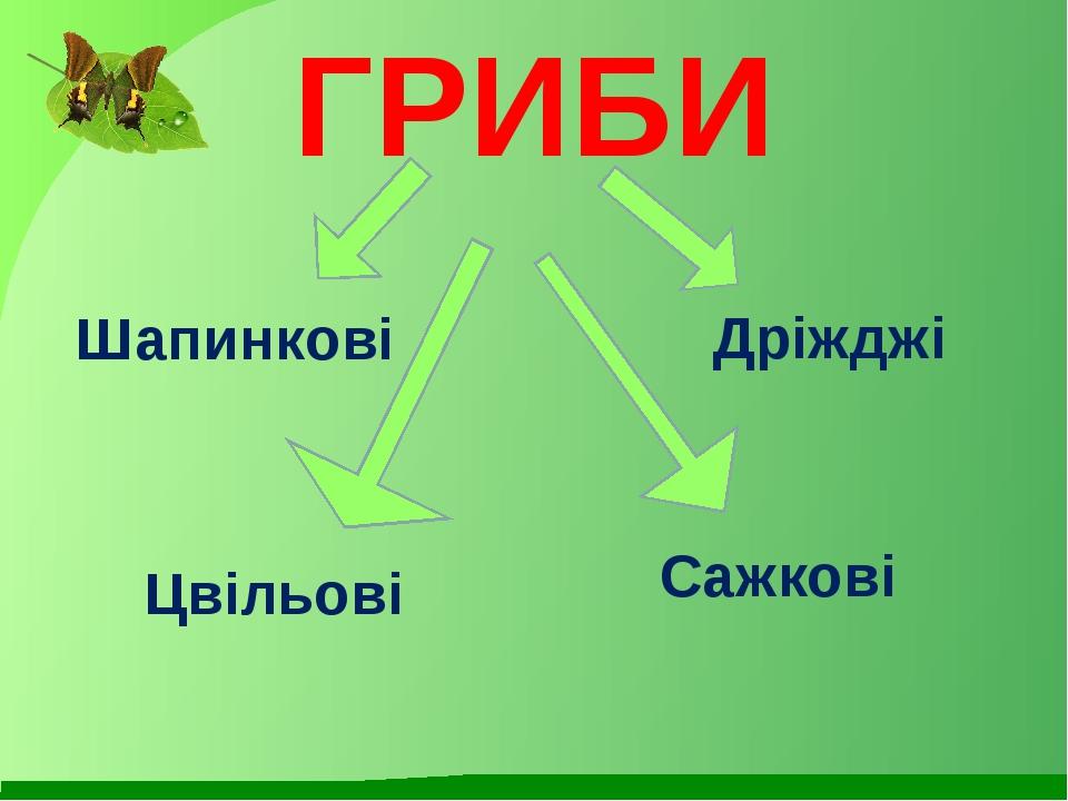 ГРИБИ Шапинкові Дріжджі Цвільові Сажкові