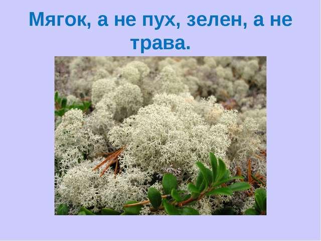 Мягок, а не пух, зелен, а не трава.