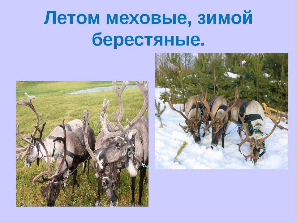 Летом меховые, зимой берестяные.