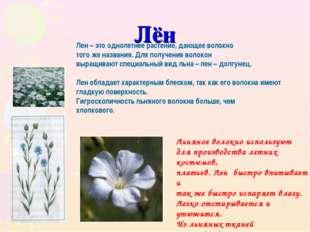 Лён Лен – это однолетнее растение, дающее волокно того же названия. Для получ