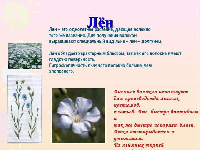 Лён Лен – это однолетнее растение, дающее волокно того же названия. Для получ...