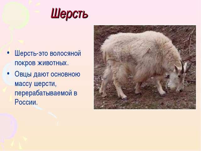 Шерсть Шерсть-это волосяной покров животных. Овцы дают основною массу шерсти,...